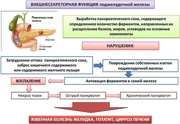 pancreatite lista degli alimenti per la dieta delle ghiandole